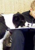 kutyaterapia3