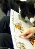 kutyaterapia5